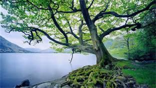 tree over lake